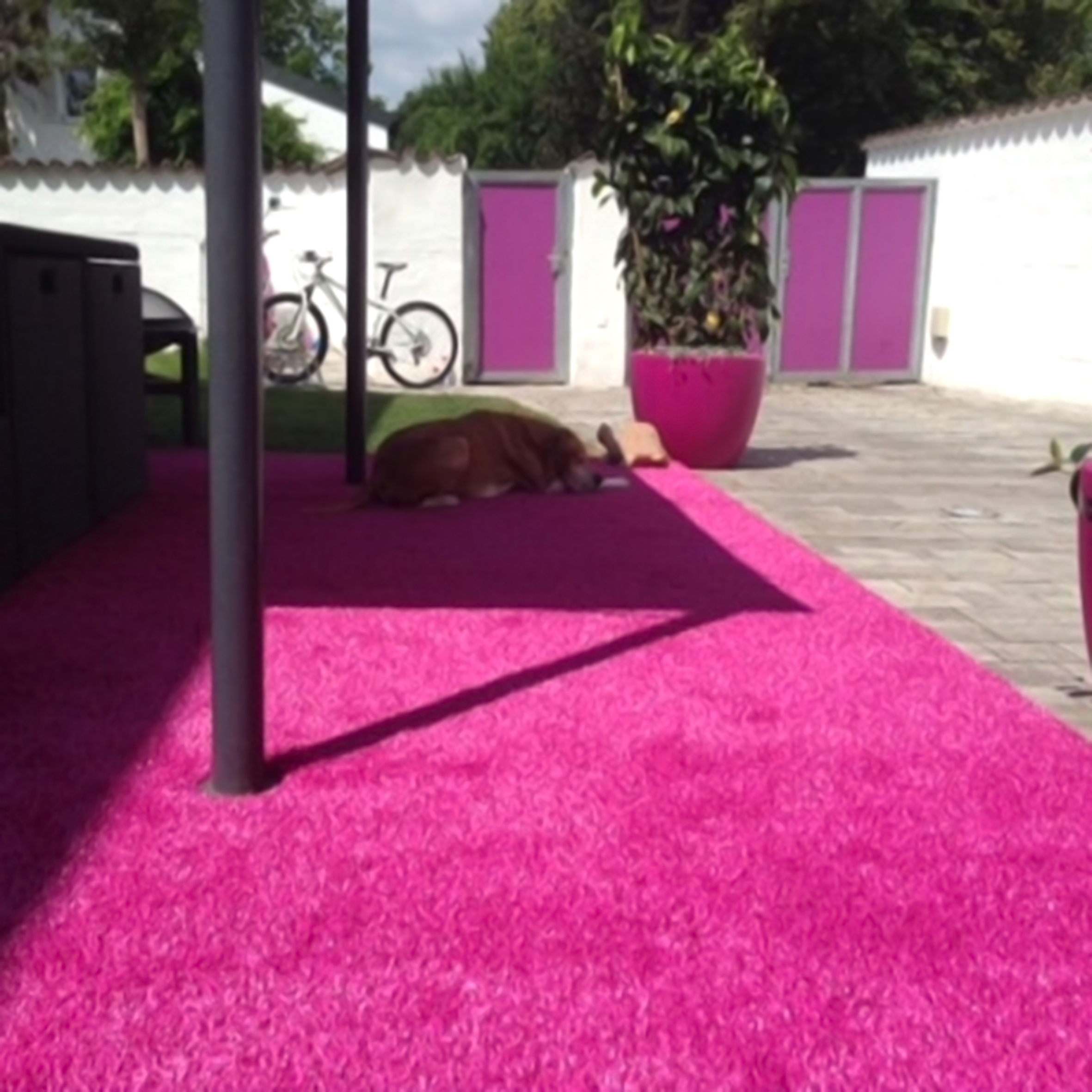 coriandoli pink